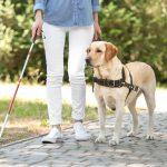 Un altro Tribunale sentenzia: i cani guida dovevano accedere alle scale mobili